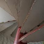 Las escaleras del faro
