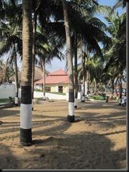 Irrigating palms