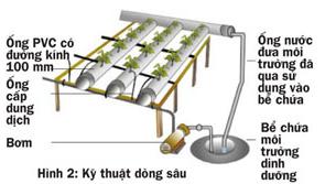 Các cách trồng rau thủy canh - 56874bbfaea48