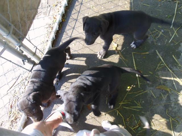 Serena & Jaspers 5-13-12 litter - SAM_3986.JPG
