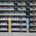韓国発「五輪スキャンダル」が続出…東京五輪での韓国人の言動が注目k