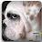 LOVADOG.com's profile photo