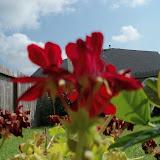 Gardening 2011 - 100_0164.JPG