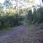 Blackwattle management trail east of Blackwattle Place (152830)
