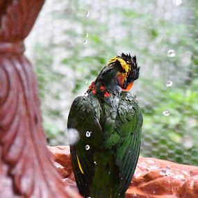 by Patricia Romero - Animals Birds