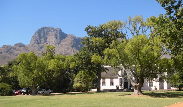 Vinyard near Stellenbosche