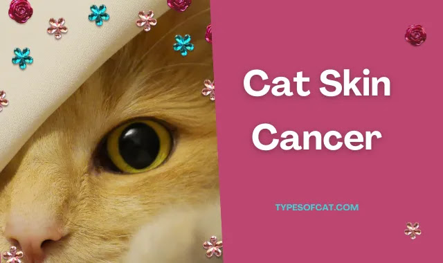 cancer,cat cancer,cancer in cats,skin cancer,pet cancer,cat cancer symptoms,cat skin cancer,cancer cat,feline skin cancer,animal skin cancer,feline cancer,skin cancer awareness,skin cancer classification,signs of cancer in cats