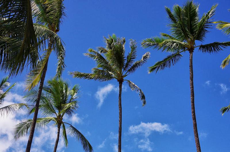 06-17-13 Travel to Oahu - IMGP6859.JPG
