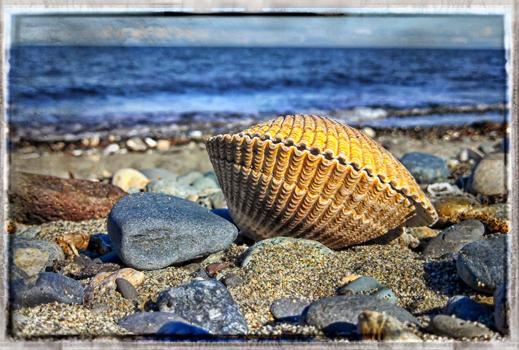 """Phoneography at the beach"" by Ardythe Wendt -- 2nd Place Digital Special A"