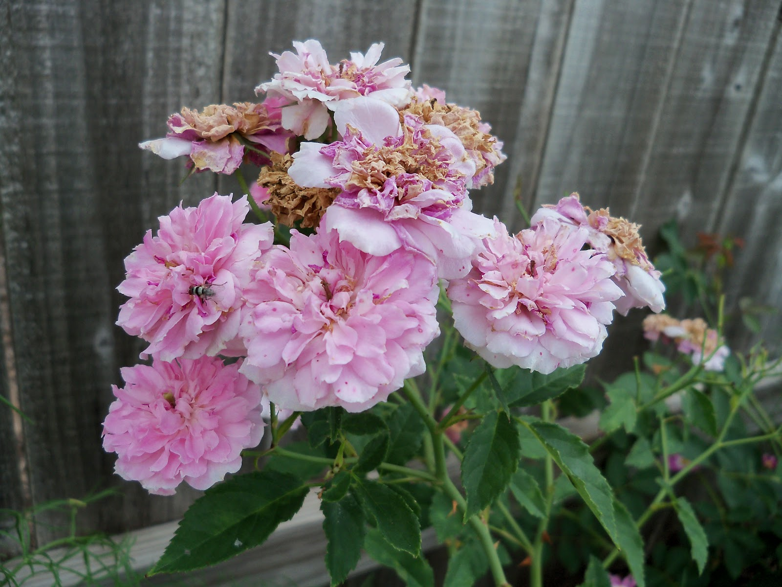 Gardening 2010, Part Two - 101_2936.JPG