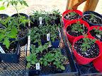 Greenhouse May 3.