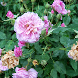 Gardening 2014 - 116_1824.JPG