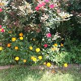 Gardening 2012 - IMG_3802.JPG