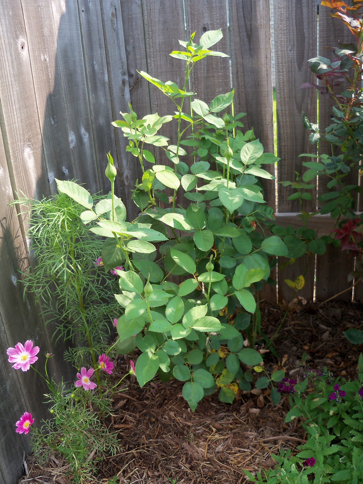 Gardening 2010, Part Two - 101_3094.JPG