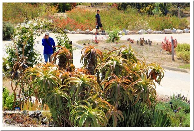 160813_UCSC_Arboretum_217
