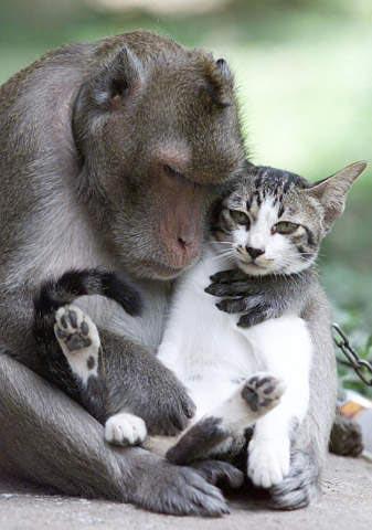 gatto e scimmia