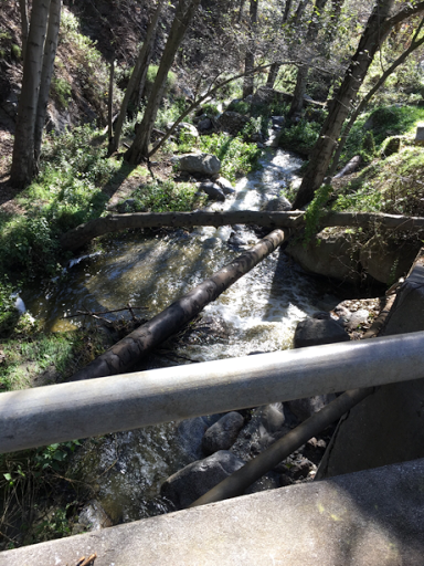 Stream Full in Monrovia Park