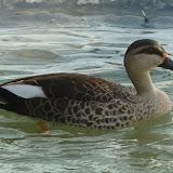 Livingston Ripley Waterfowl Conservancy - P1020522.JPG