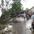 Angin Ribut di Wadas, Pohon Tumbang Jalur Syekh Quro Macet