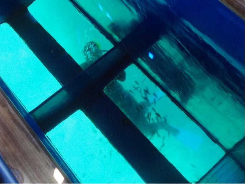 Gjennom 4 glassruter i bunnen av båten ser vi en dykker som mater fisk.
