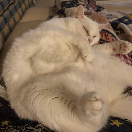 Susan Morrison Photo 35