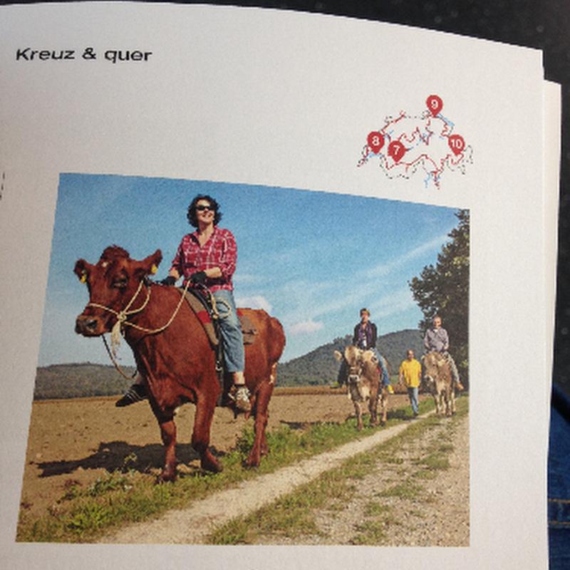 क्या कभी आप भी गाय की सवारी करना चाहेंगे...?