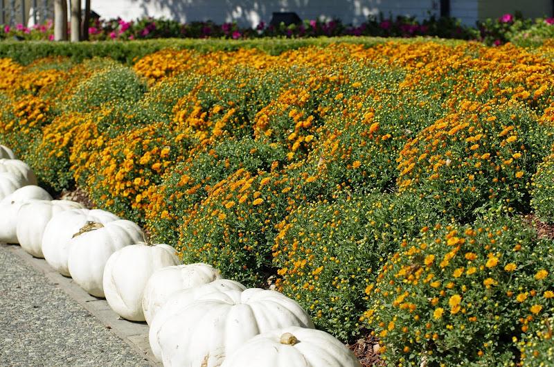 10-26-14 Dallas Arboretum - _IGP4268.JPG