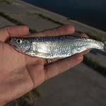 20150617_Fishing_Oleksandriya_013.jpg