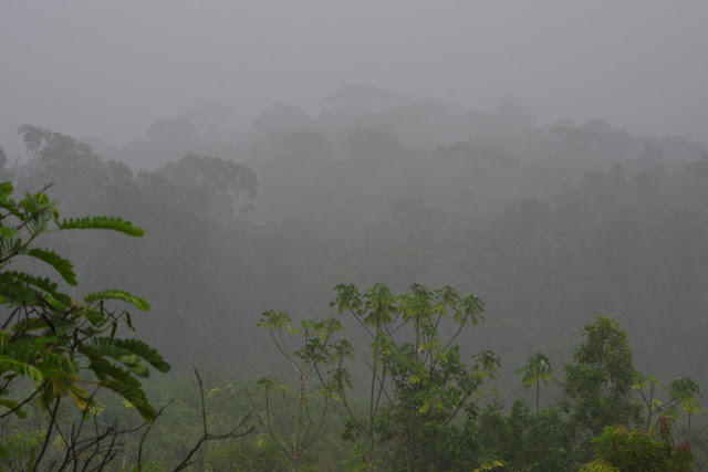 La forêt sous la pluie. Les Carbets de Coralie (Crique Yaoni), 2 novembre 2012. Photo : J.-M. Gayman