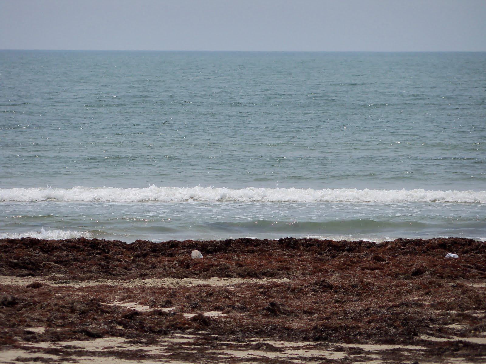 Surfside 2011 - 100_9477.JPG