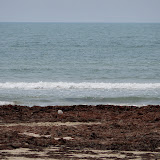 Surfside 2011 - 100_9477.JPG