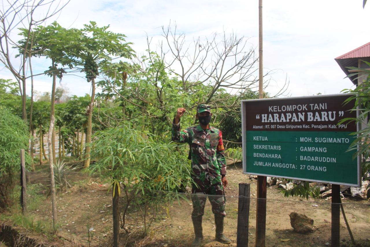 Babinsa Kelurahan Petung Menjadi Panutan Petani Terus Berkarya