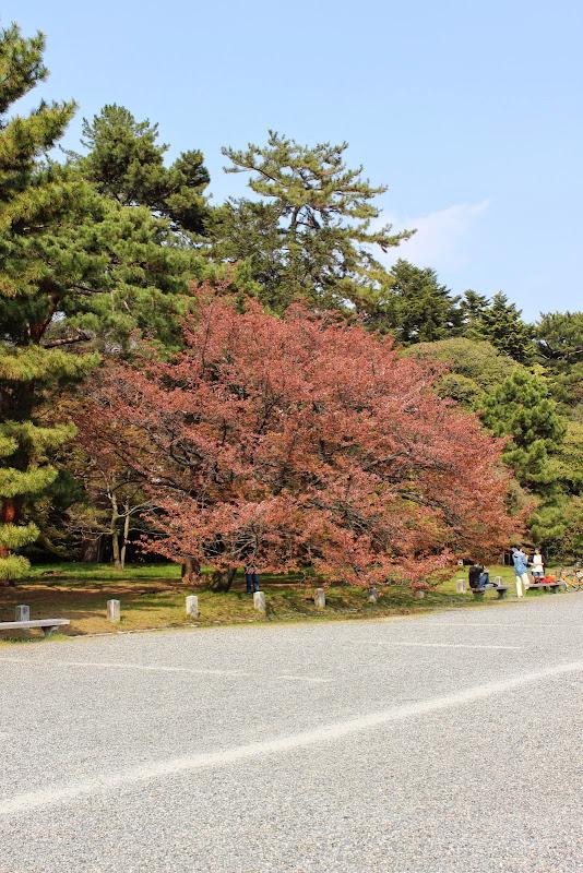 2014 Japan - Dag 10 - marjolein-IMG_1383-0166.JPG