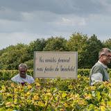 Petites vendanges 2017 du chardonnay gelé. guimbelot.com - 2017-09-30%2Bvendanges%2BGuimbelot%2Bchardonay-174.jpg