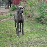 True Blue...as he grew - True%2BBlue1.jpg