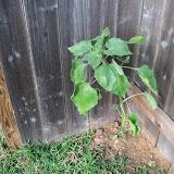 Gardening 2010 - 101_1549.JPG