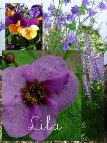 violetti.jpg