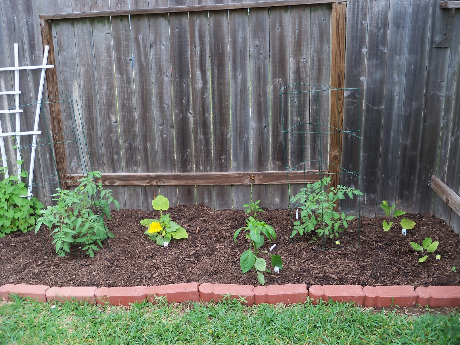 Gardening 2011 - 100_7292.JPG