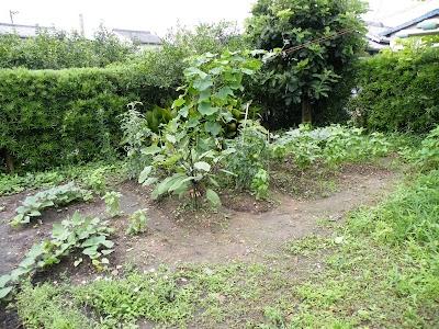 2010年7月12日朝の家庭菜園の様子