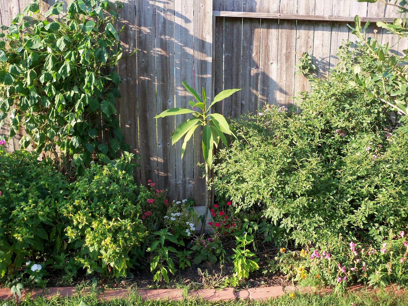 Gardening 2011 - 100_9218.JPG