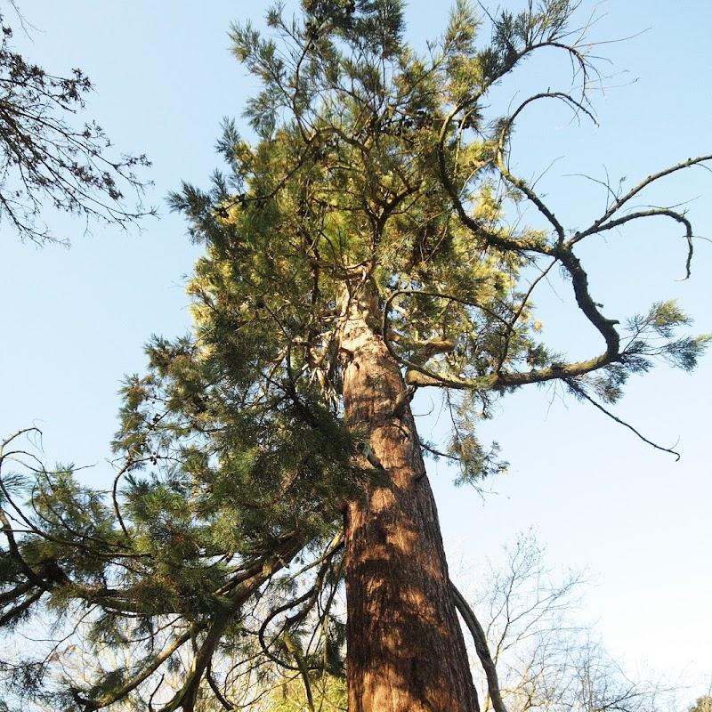Stowe_Trees_05.JPG