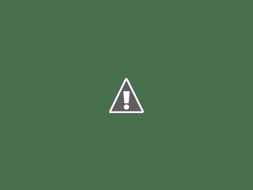 18 05 2013 18+copy - Кошки ))