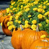 10-26-14 Dallas Arboretum - _IGP4301.JPG
