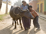Village children with their buffalo