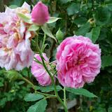 Gardening 2014 - 116_1828.JPG