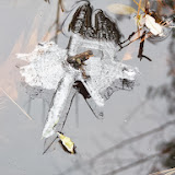 Watch for intersting ice formations around the edge of swamps and ponds this month
