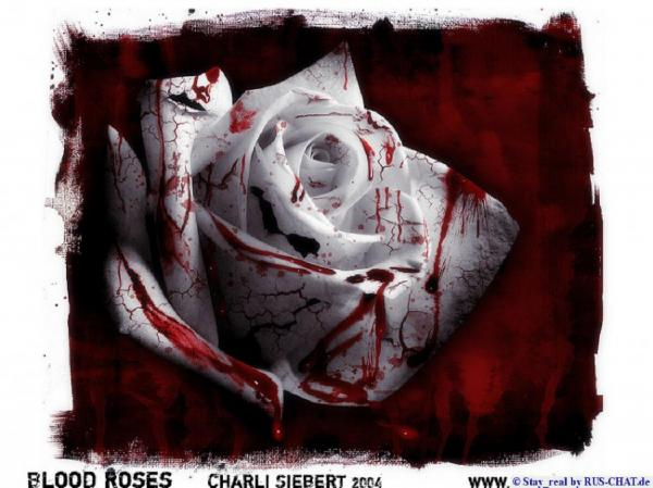 Bloody Rose White Red, Bloody