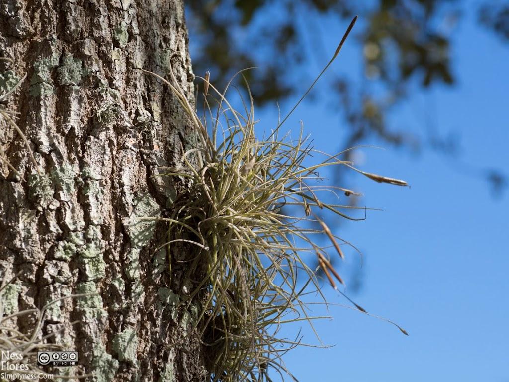 TreeSigma60mmF50-1220053
