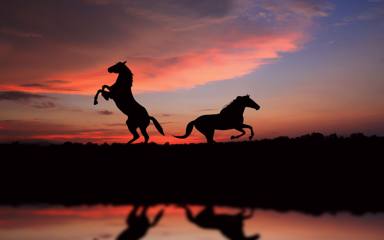 Horse sunset 6k 5760x3600 hd wallpaper - Inspirational 6k hd wallpaper ...