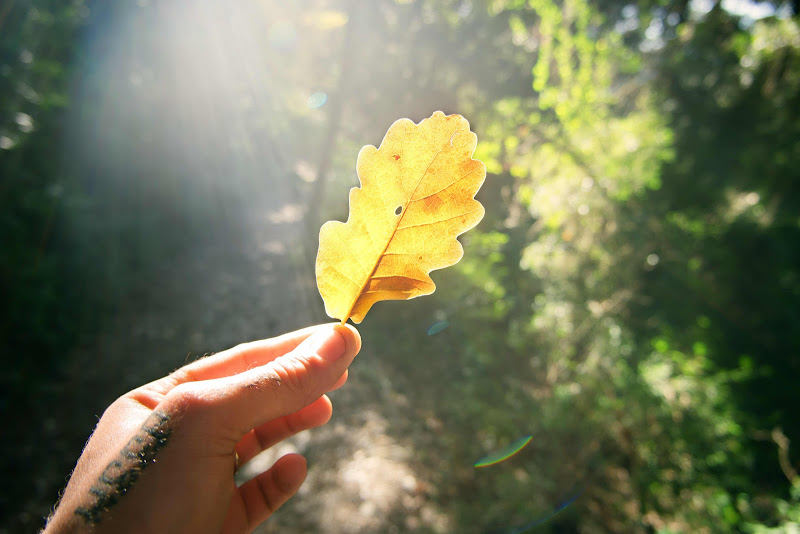 otoño adra castillon